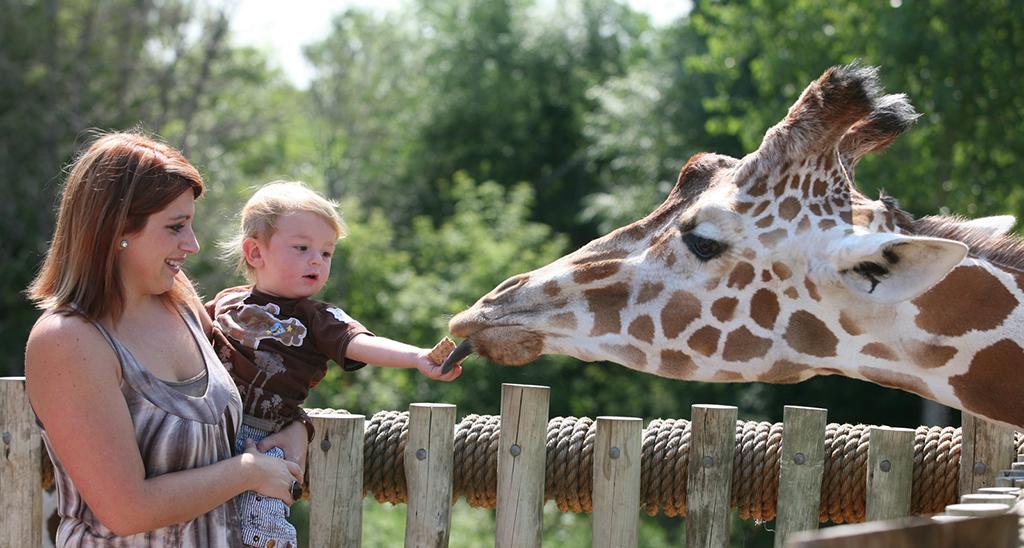 Feeding Giraffe By Visit Lakeville