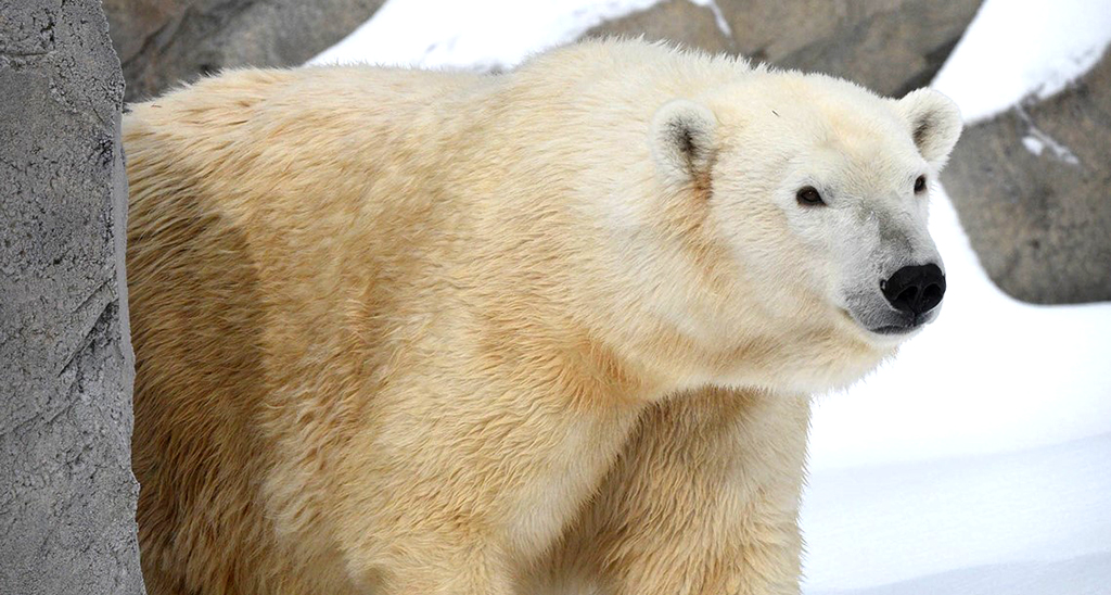 Como-Zoo-Visit-Lakeville-Attractions
